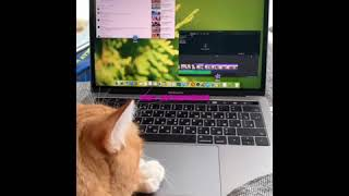 кот сам монтирует видео