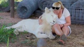 Walking with Lions, and Swimming with Tigers in South Africa