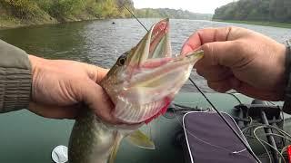 Искали на Глубине а Рыба под Берегом Рыбалка на Спиннинг осенью