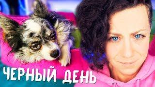 Моя собака ЗАБОЛЕЛА НЕ ДЫШИТ СГЛАЗИЛИ !? ЧТО СЛУЧИЛОСЬ С СОФИ MAGIC FAMILY ?!