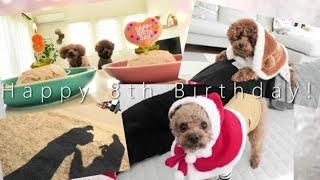 12月23日は、Taruちゃんの8歳のお誕生日でした   とっても簡単な犬用ケ...