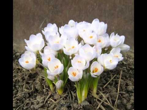 Стихи весенний цвет