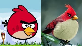 Angry Birds Characters In Real Life | All Characters 2017