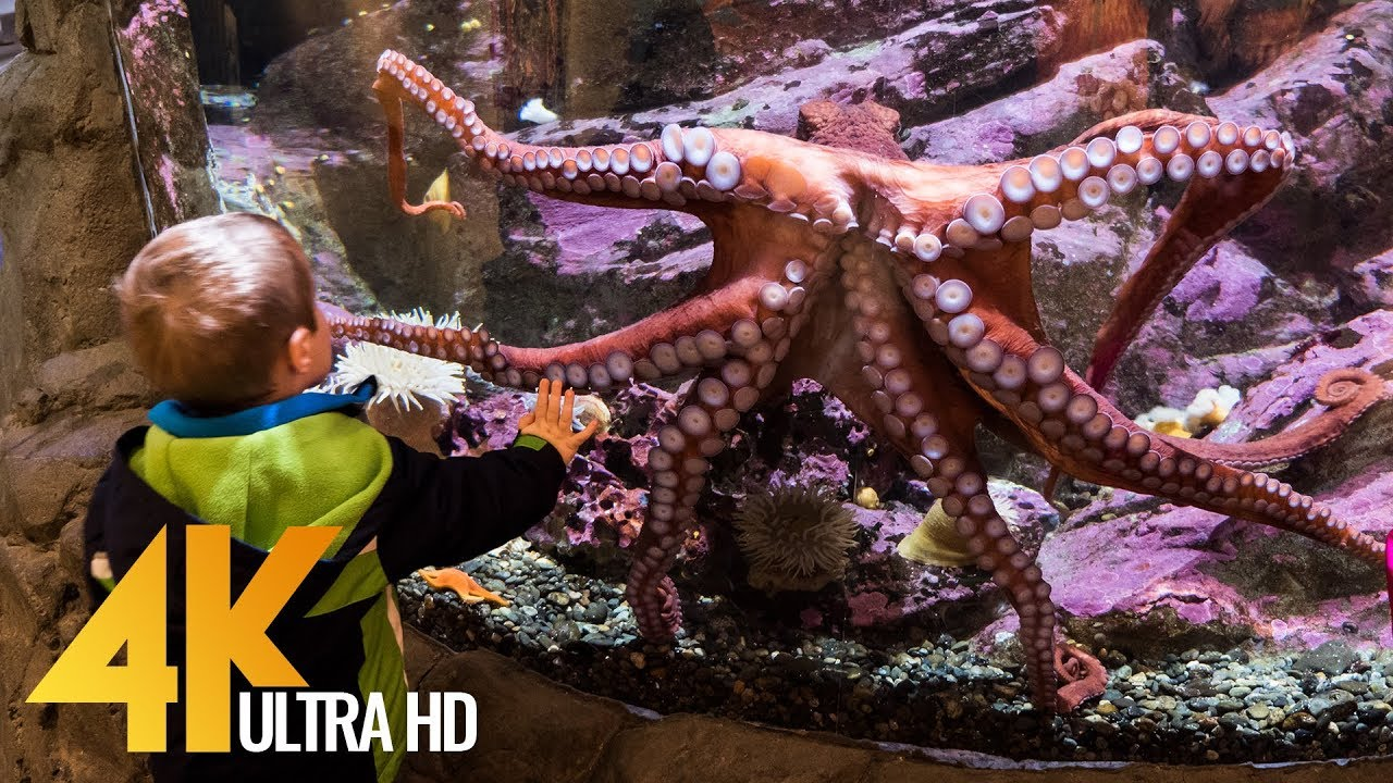 Seattle Aquarium in 4K (Ultra HD) - Underwater World Relaxing Video with Ambient Music - 2 Hour
