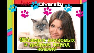 15 самых ласковых и добрых пород кошек