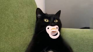 Подборка приколов с животными/ Кошки #3