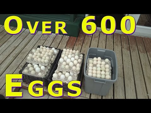 50+ Dozen Eggs Donated to the Food Bank April 24, 2018