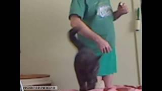 Advanced Clicker Training: Cat Doing Dog Tricks
