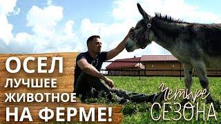 Зачем нужны ослы на ферме? | История любви Колы и Тихона