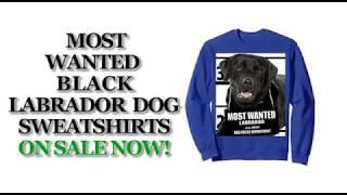 Most Wanted Black Labrador Cute Funny Dog Sweatshirts - Men's, Women's, Kid's - Blue, Grey, Heather