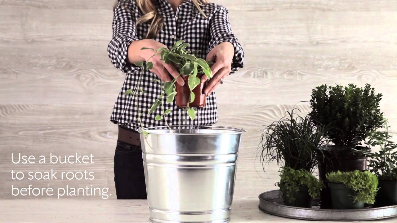 How To Plant A Boxwood Container Southern Living Youtube
