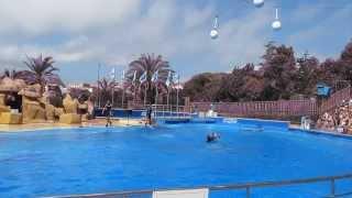 Аквапарк - MARINELAND. Шоу дельфинов (эпизод 2)