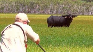 VQ Aaron Neilson Australian Water Buffalo Hunt