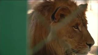 محمية طبيعية للحفاظ على الحيوانات الشرسة في الأردن