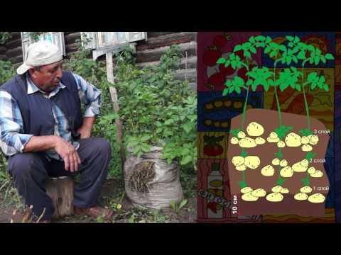 Как вырастить КАРТОШКУ В МЕШКЕ! Уникальный способ выращивания картофеля!