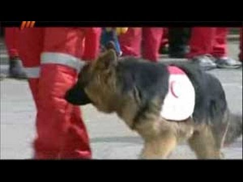 Trained dogs in Iranian Red Crescent  drill