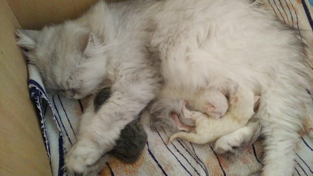 Katzen Geburt