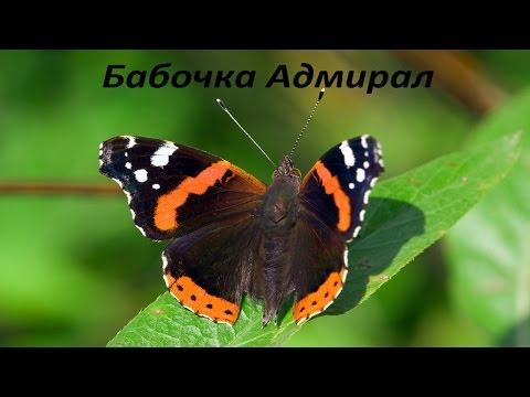 Насекомые, каталог насекомых московской области, бабочки