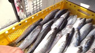 Рыбный рынок в Батуми. Можно пожарить купленную рыбу! Богат ещё на поляков и подписчиков.)))