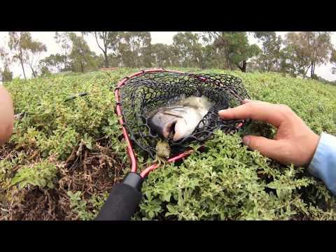 Melbourne Bream On Cranka Crabs