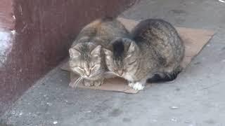Бездомные кошки обнимаются
