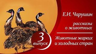 Е. И. Чарушин - Животные жарких и холодных стран  |  Аудиорассказы для детей