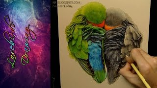 Lovebirds Drawing