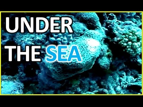 Under the Sea :  Diving - Underwater Baker Island (part 1)