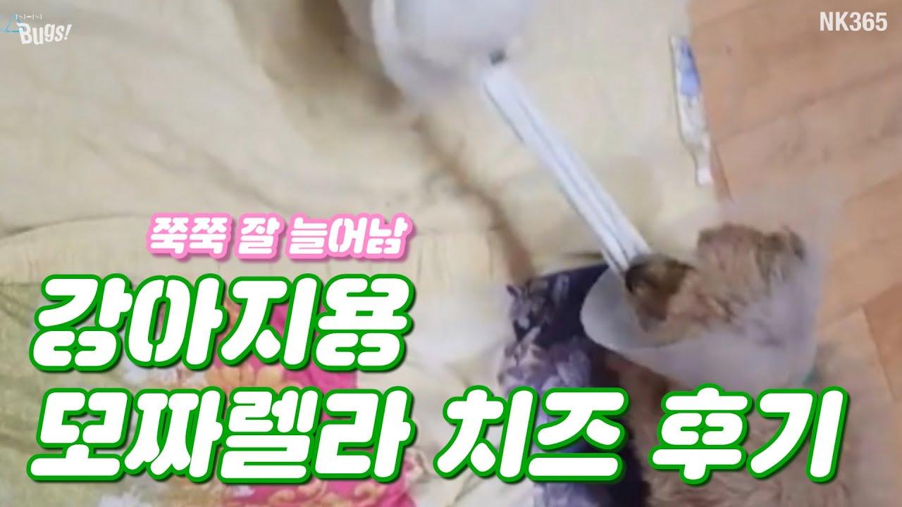 강아지 전용 모짜렐라 치즈 후기!! 쭉쭉 잘 늘어남!!!ㅣ강아지 VLOG