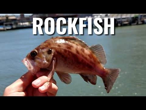 Easiest California Pier Fishing | How To Catch Rockfish From Any Pier