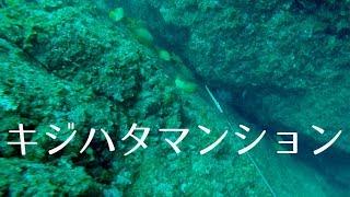 2016年9月某日。日本海某所。2年ぶりに訪れた根。以前は足繁く通ってい...
