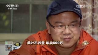 20170518 致富经  桑叶不养蚕 年卖800万