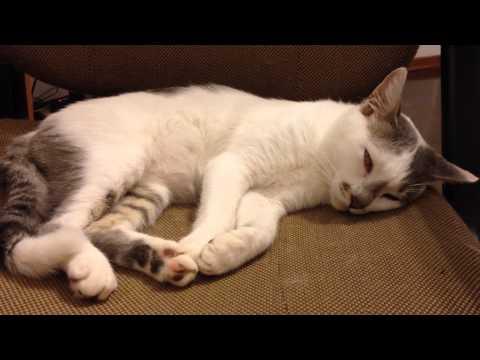 cat fell into deep sleep and rolls his eyes