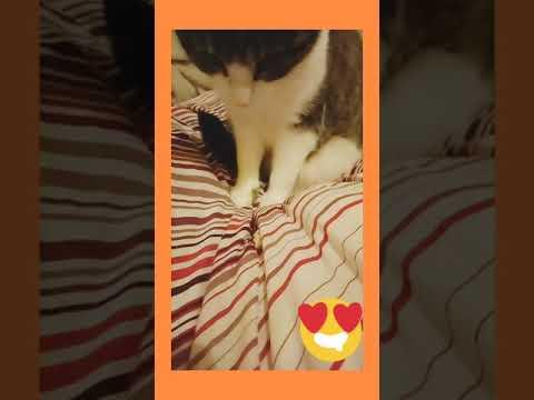 #cat #cute #funny -Yuki Choo exploring lotus seed pops 😆
