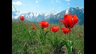 А у нас на Юге Казахстана снова настоящая весна. Вл. Храбров