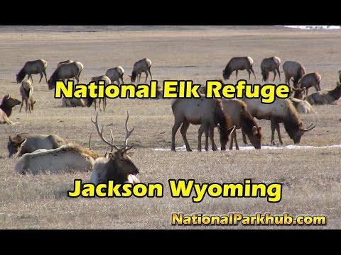 The National Elk Refuge Story/History - Jackson Hole Wyoming - HD Video