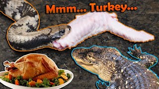 Giving our Reptiles a Thanksgiving Feast!