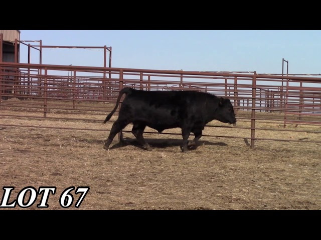 Mead Angus Farms Lot 67