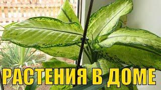 Комнатные растения у нас в доме (1-я часть)