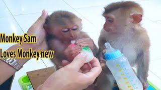 After rescue Monkey escape from hunters -  Sam loves and takes care