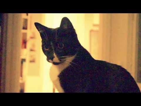 Cute cat listening to classical music | Doovi