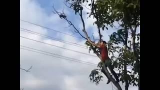 Героем видео стал житель Пятигорска, спасший с высокого дерева перепуганного кота