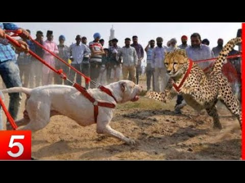 10-most-dangerous-dog-breeds-in-the-world