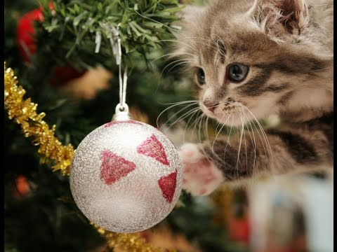See how these cats are ruining Christmas trees! funny compilation ...