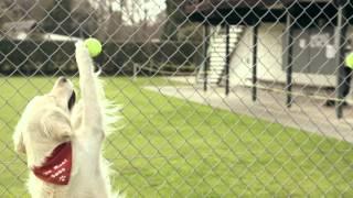 Caddy Tennis: Ball Dog Academy.