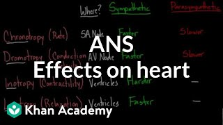 Autonomic nervous system effects on the heart | NCLEX-RN | Khan Academy