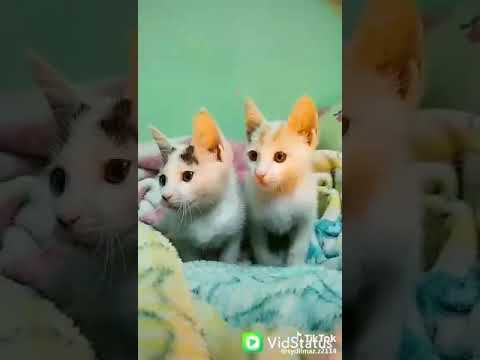 New trend🔥🔥🔥 cute cats couple 🔥🔥