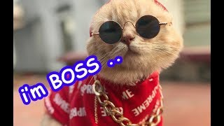 Funny Cats Dogs Fails Compilation 2019 |  Funny Vines Video  - TRY NOT TO LAUGH