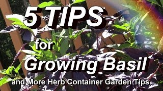 The Herb Container Garden Tour + 5 Tips for Growing Basil & Identify Scale Insects