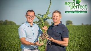 Agriful.info - Realne Efekty i Warsztaty dla Rolników